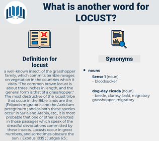 locust, synonym locust, another word for locust, words like locust, thesaurus locust