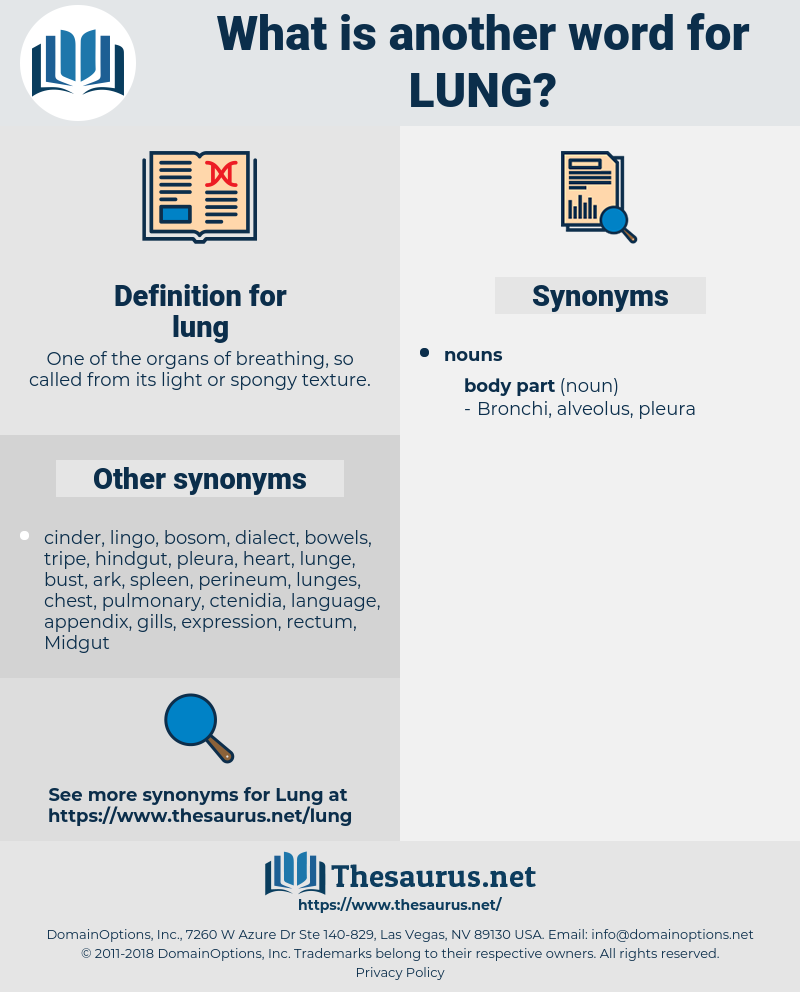 lung, synonym lung, another word for lung, words like lung, thesaurus lung