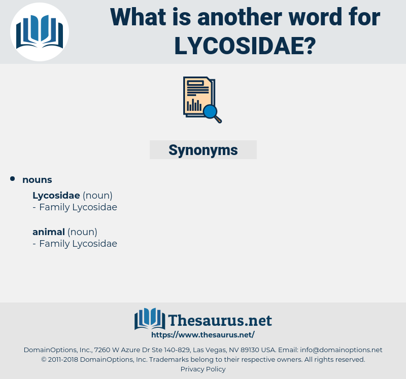 lycosidae, synonym lycosidae, another word for lycosidae, words like lycosidae, thesaurus lycosidae