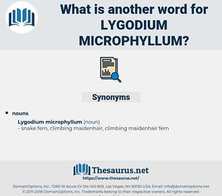 Lygodium Microphyllum, synonym Lygodium Microphyllum, another word for Lygodium Microphyllum, words like Lygodium Microphyllum, thesaurus Lygodium Microphyllum