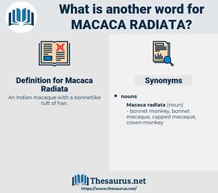 Macaca Radiata, synonym Macaca Radiata, another word for Macaca Radiata, words like Macaca Radiata, thesaurus Macaca Radiata
