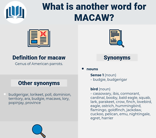 macaw, synonym macaw, another word for macaw, words like macaw, thesaurus macaw