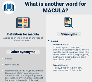 macula, synonym macula, another word for macula, words like macula, thesaurus macula
