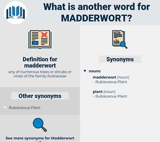 madderwort, synonym madderwort, another word for madderwort, words like madderwort, thesaurus madderwort