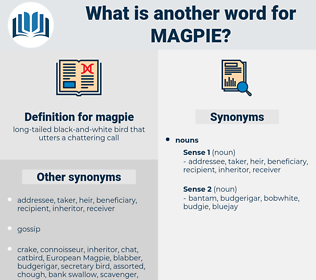 magpie, synonym magpie, another word for magpie, words like magpie, thesaurus magpie