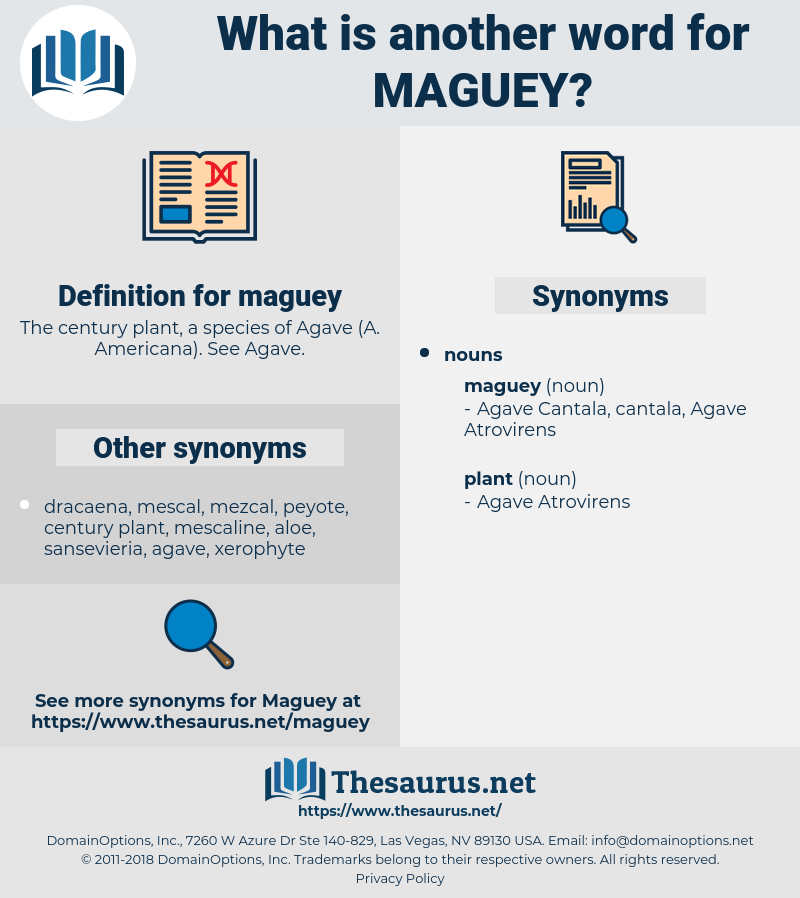 maguey, synonym maguey, another word for maguey, words like maguey, thesaurus maguey