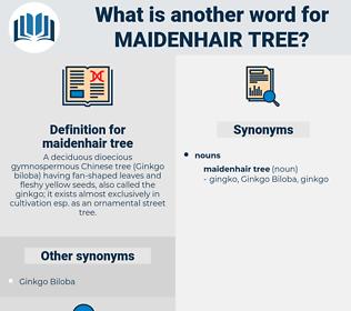 maidenhair tree, synonym maidenhair tree, another word for maidenhair tree, words like maidenhair tree, thesaurus maidenhair tree