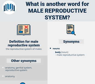 male reproductive system, synonym male reproductive system, another word for male reproductive system, words like male reproductive system, thesaurus male reproductive system