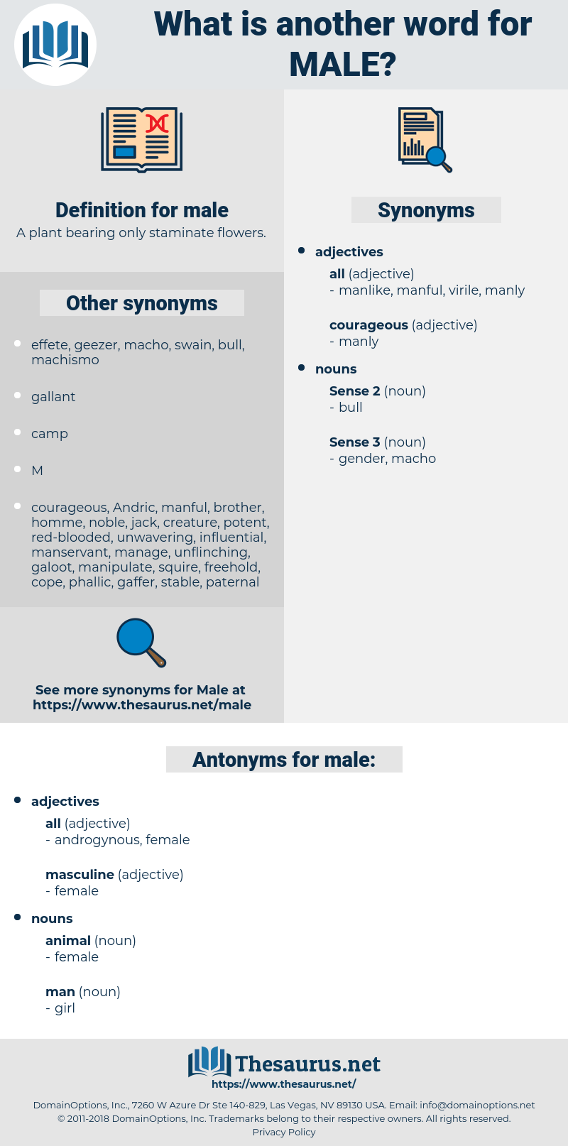 male, synonym male, another word for male, words like male, thesaurus male