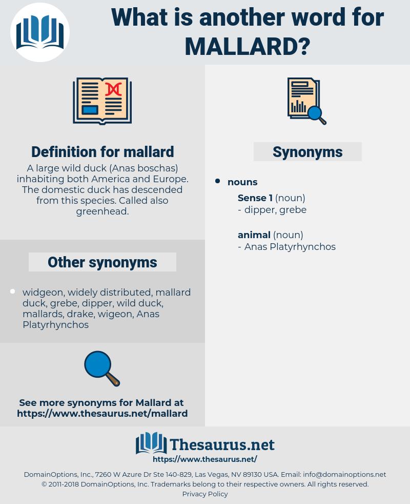 mallard, synonym mallard, another word for mallard, words like mallard, thesaurus mallard