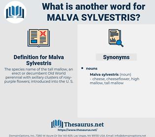 Malva Sylvestris, synonym Malva Sylvestris, another word for Malva Sylvestris, words like Malva Sylvestris, thesaurus Malva Sylvestris