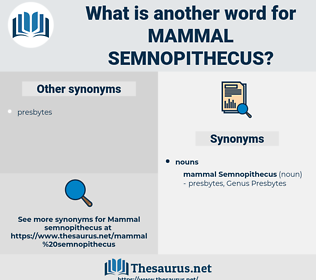 Mammal Semnopithecus, synonym Mammal Semnopithecus, another word for Mammal Semnopithecus, words like Mammal Semnopithecus, thesaurus Mammal Semnopithecus