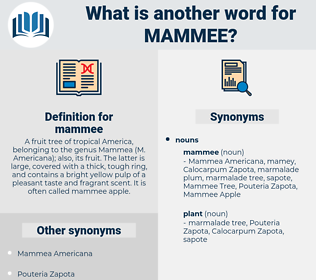 mammee, synonym mammee, another word for mammee, words like mammee, thesaurus mammee