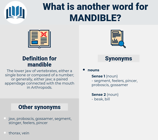 mandible, synonym mandible, another word for mandible, words like mandible, thesaurus mandible