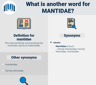 mantidae, synonym mantidae, another word for mantidae, words like mantidae, thesaurus mantidae
