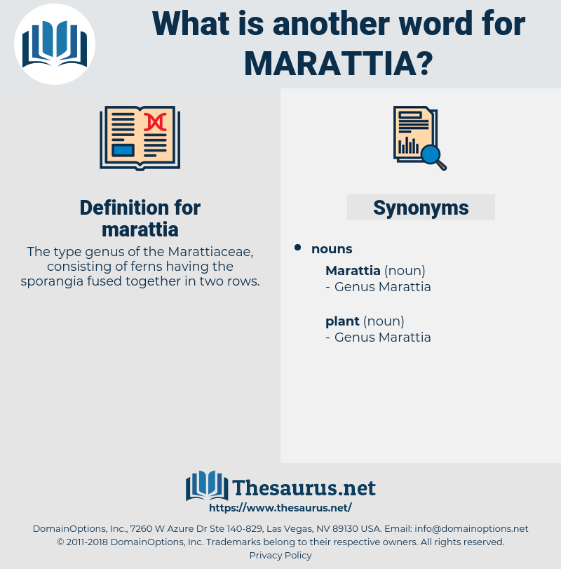 marattia, synonym marattia, another word for marattia, words like marattia, thesaurus marattia