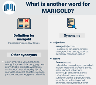 marigold, synonym marigold, another word for marigold, words like marigold, thesaurus marigold