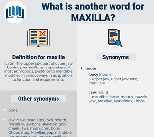 maxilla, synonym maxilla, another word for maxilla, words like maxilla, thesaurus maxilla