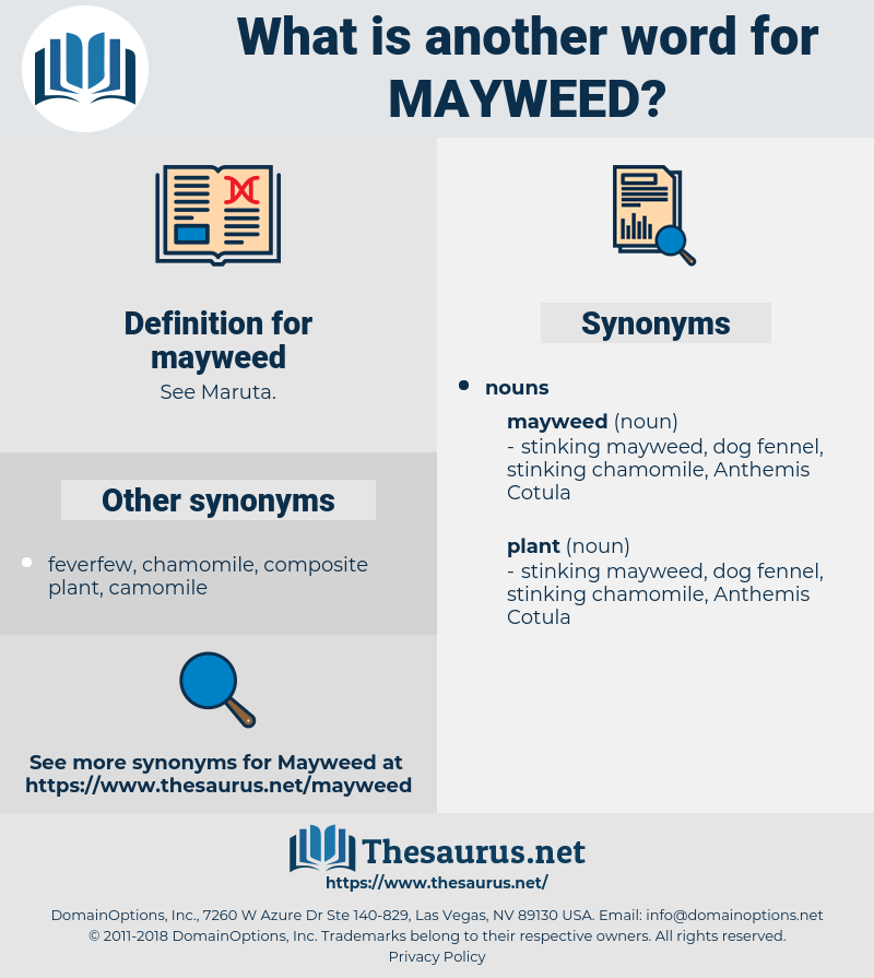 mayweed, synonym mayweed, another word for mayweed, words like mayweed, thesaurus mayweed