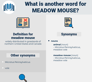 meadow mouse, synonym meadow mouse, another word for meadow mouse, words like meadow mouse, thesaurus meadow mouse