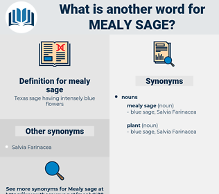 mealy sage, synonym mealy sage, another word for mealy sage, words like mealy sage, thesaurus mealy sage