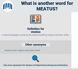 meatus, synonym meatus, another word for meatus, words like meatus, thesaurus meatus