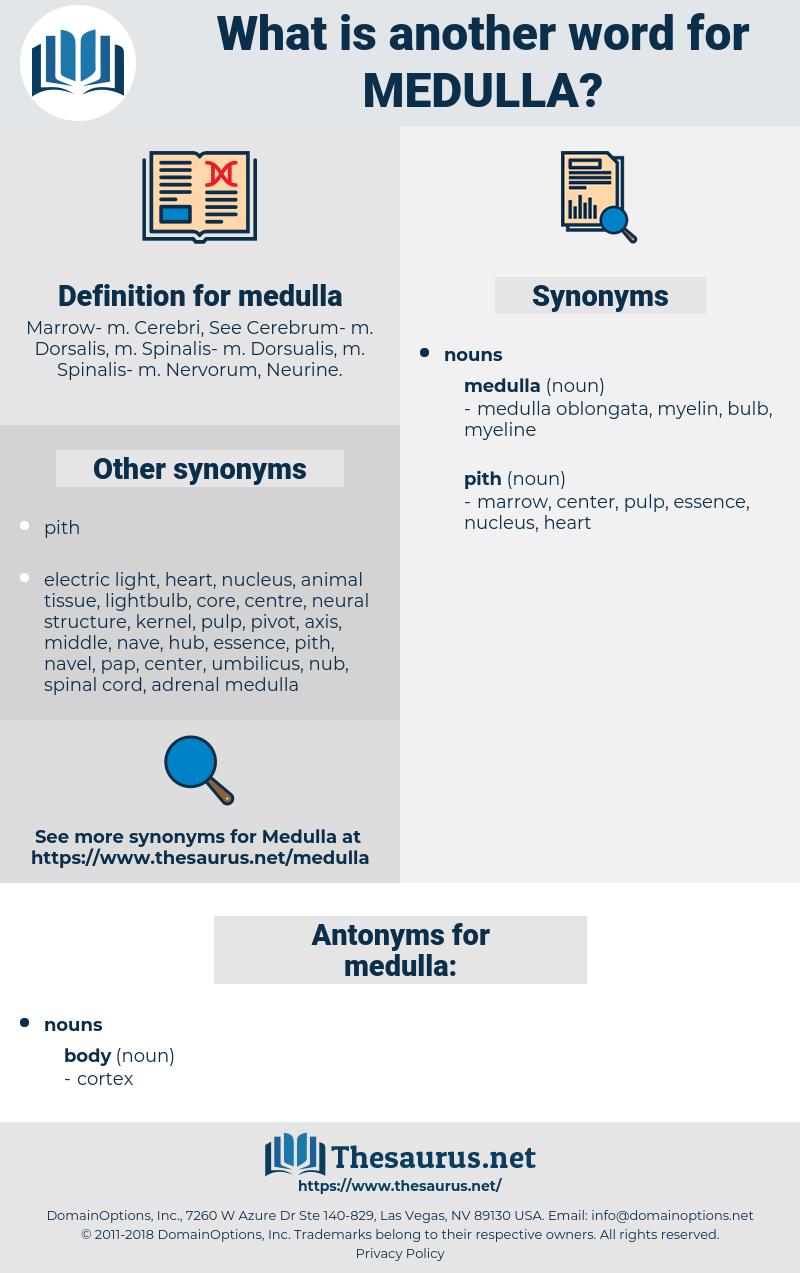 medulla, synonym medulla, another word for medulla, words like medulla, thesaurus medulla