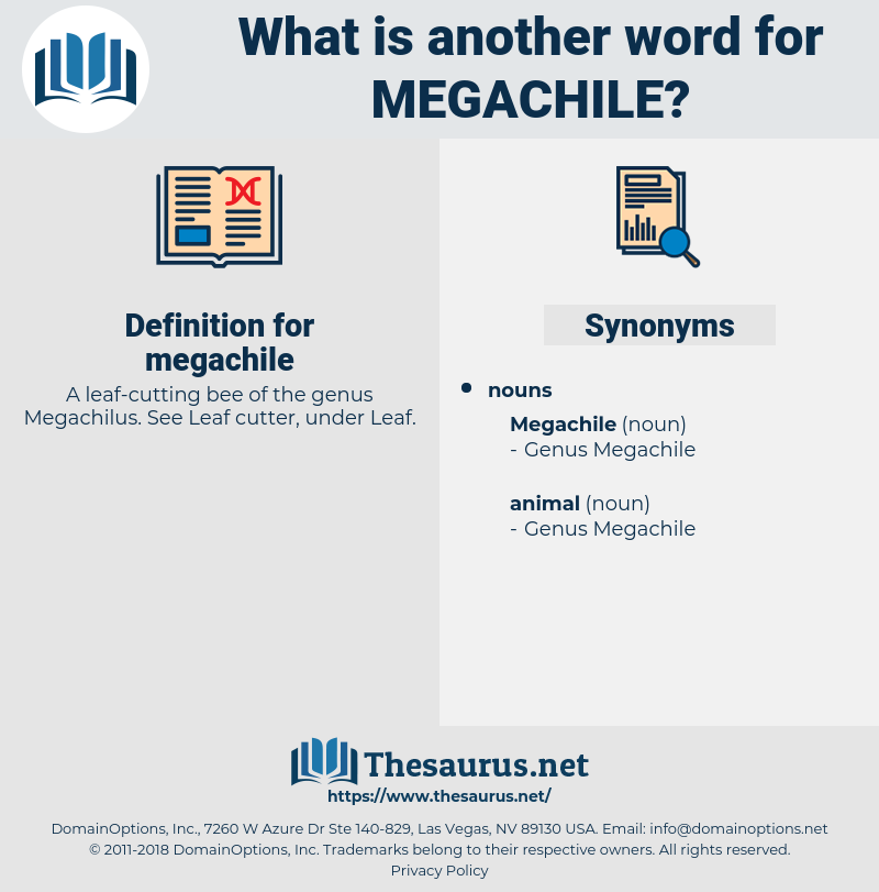 megachile, synonym megachile, another word for megachile, words like megachile, thesaurus megachile