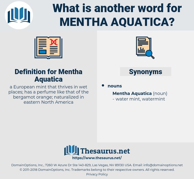 Mentha Aquatica, synonym Mentha Aquatica, another word for Mentha Aquatica, words like Mentha Aquatica, thesaurus Mentha Aquatica