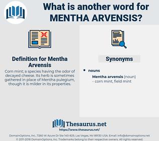 Mentha Arvensis, synonym Mentha Arvensis, another word for Mentha Arvensis, words like Mentha Arvensis, thesaurus Mentha Arvensis