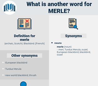 merle, synonym merle, another word for merle, words like merle, thesaurus merle