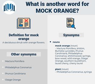 mock orange, synonym mock orange, another word for mock orange, words like mock orange, thesaurus mock orange