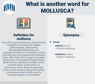mollusca, synonym mollusca, another word for mollusca, words like mollusca, thesaurus mollusca