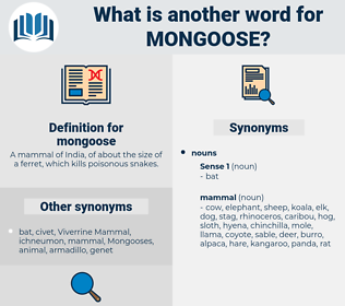 mongoose, synonym mongoose, another word for mongoose, words like mongoose, thesaurus mongoose
