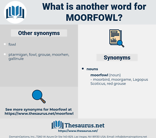 moorfowl, synonym moorfowl, another word for moorfowl, words like moorfowl, thesaurus moorfowl