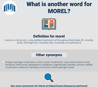 morel, synonym morel, another word for morel, words like morel, thesaurus morel