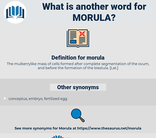 morula, synonym morula, another word for morula, words like morula, thesaurus morula