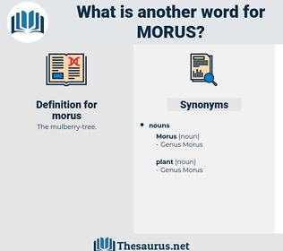 morus, synonym morus, another word for morus, words like morus, thesaurus morus