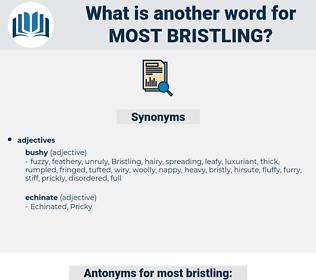 most bristling, synonym most bristling, another word for most bristling, words like most bristling, thesaurus most bristling