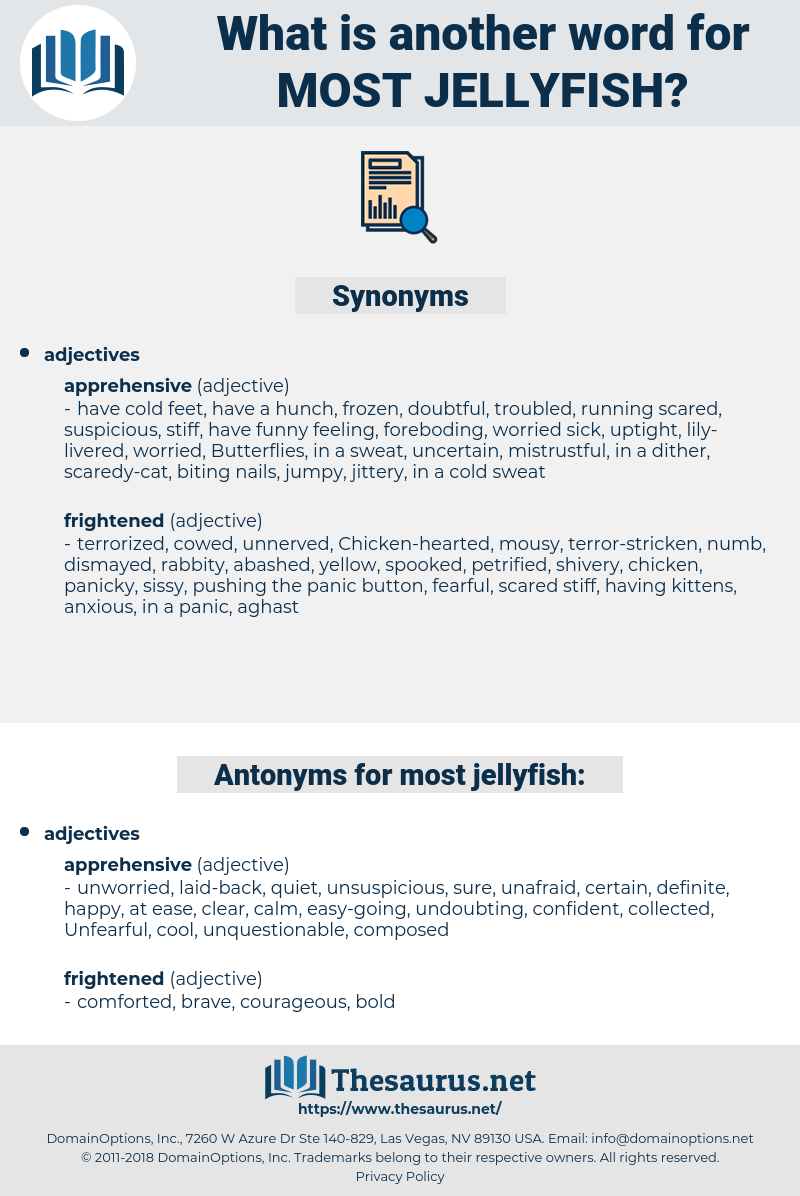 most jellyfish, synonym most jellyfish, another word for most jellyfish, words like most jellyfish, thesaurus most jellyfish