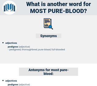 most pure-blood, synonym most pure-blood, another word for most pure-blood, words like most pure-blood, thesaurus most pure-blood