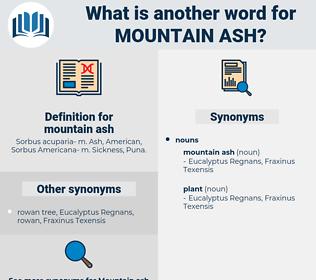 mountain ash, synonym mountain ash, another word for mountain ash, words like mountain ash, thesaurus mountain ash