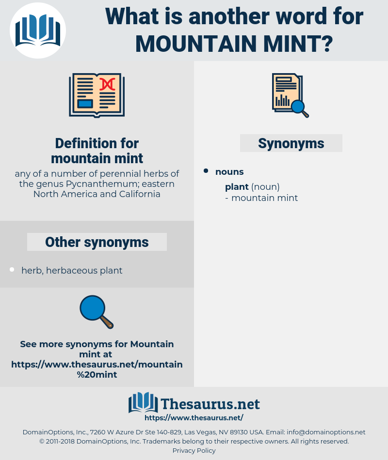 mountain mint, synonym mountain mint, another word for mountain mint, words like mountain mint, thesaurus mountain mint