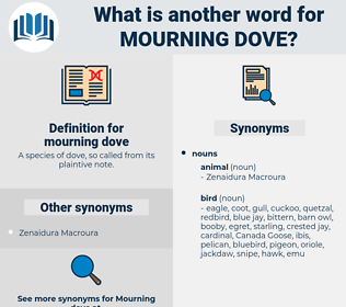 mourning dove, synonym mourning dove, another word for mourning dove, words like mourning dove, thesaurus mourning dove