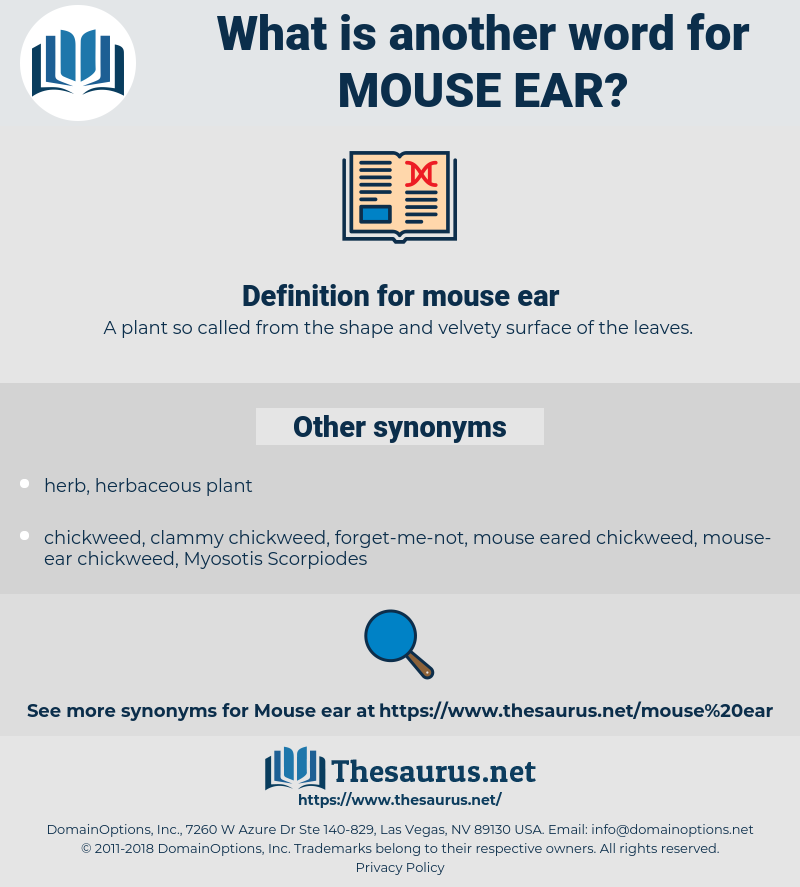 mouse ear, synonym mouse ear, another word for mouse ear, words like mouse ear, thesaurus mouse ear