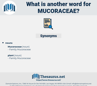 mucoraceae, synonym mucoraceae, another word for mucoraceae, words like mucoraceae, thesaurus mucoraceae