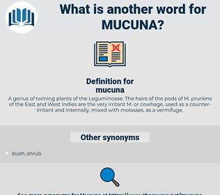 mucuna, synonym mucuna, another word for mucuna, words like mucuna, thesaurus mucuna