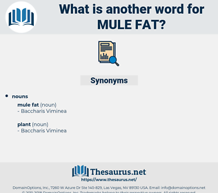 mule fat, synonym mule fat, another word for mule fat, words like mule fat, thesaurus mule fat
