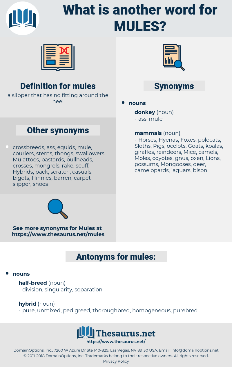 mules, synonym mules, another word for mules, words like mules, thesaurus mules