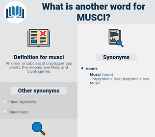 musci, synonym musci, another word for musci, words like musci, thesaurus musci